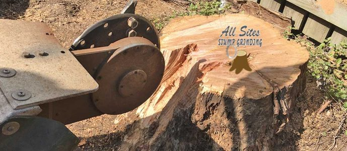 Does Stump Grinding Kill the Tree