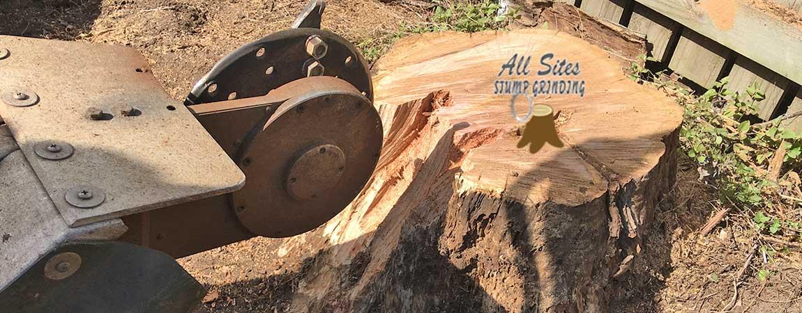 Does Stump Grinding Kill the Tree